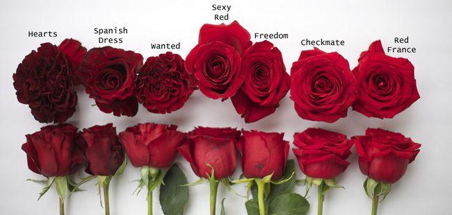 Пин на доске A Flirty Fleurs - Rose Color Studies