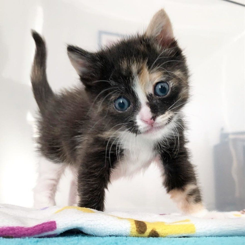 Kitten Gets Her Smile Back After Rescuers Saved Her From The Street Hours After Birth Kitten Beautiful Cats Cats And Kittens