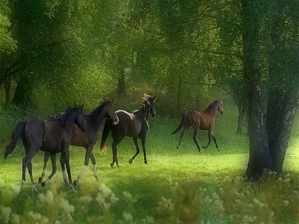 Free horse screensavers free download wallpapers running horses free horse screensavers free download wallpapers running horses free screensavers voltagebd Choice Image
