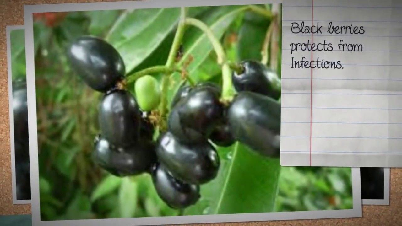 Are Blackberries Good For You Health Benefits Of Blackberry Benefits O Fruit Health Benefits Fruit Benefits Fruit