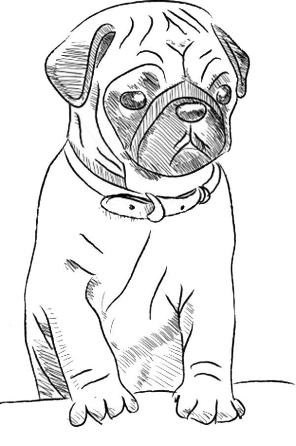 Pug Coloring Pages Best Coloring Pages For Kids Puppy Sketch Dog Drawing Simple Pug Art