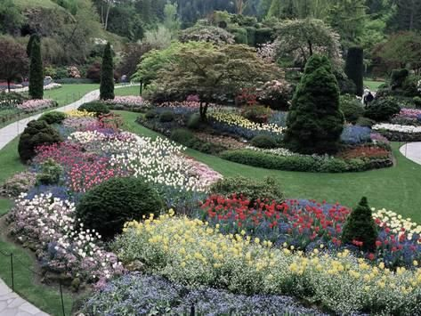 Photographic Print: Tulips in the Butchart Gardens ...