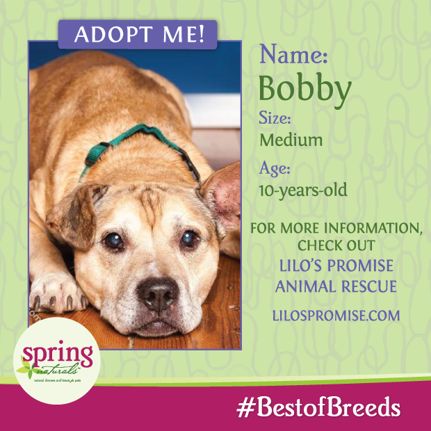 Say hello to Bobby! This handsome boy is super playful and loves to be active and take long walks. Bobby is an easy fit into almost any home that will give him plenty of love!