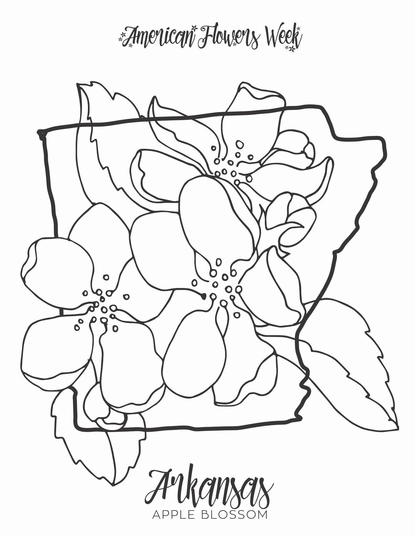Massachusetts State Flower Coloring Page Free Printable Coloring