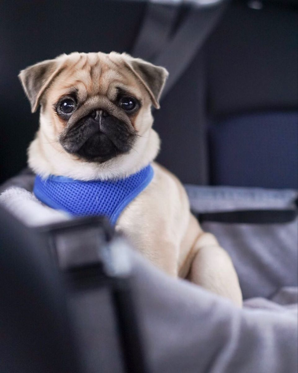 Pin By Richard Parkinson On Cute Puppies In 2020 Cute Dogs And