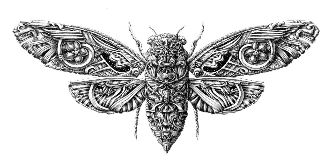 Traditional Cicada Tattoo Butterflies Inkstarhalotattoomachinediagrams