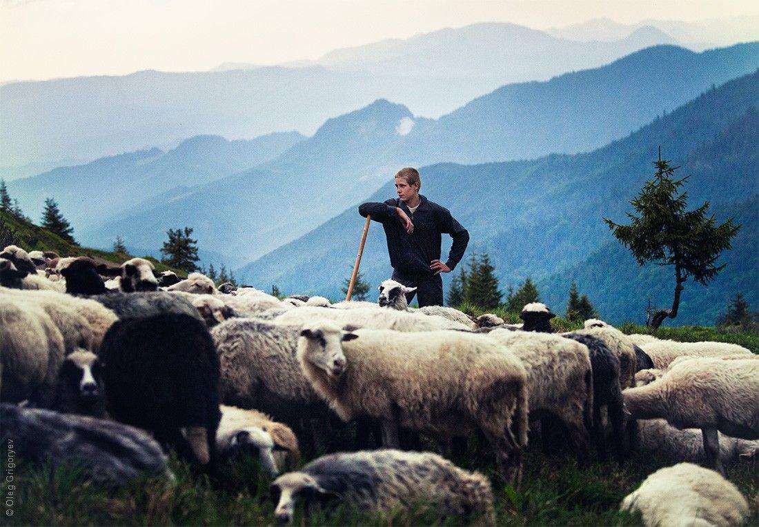 его картинка пастуха с бараном небольшого балкона