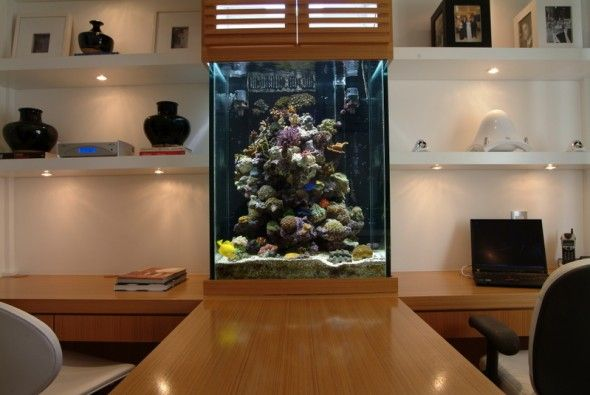 decorating of aquarium design | home is where the heart is
