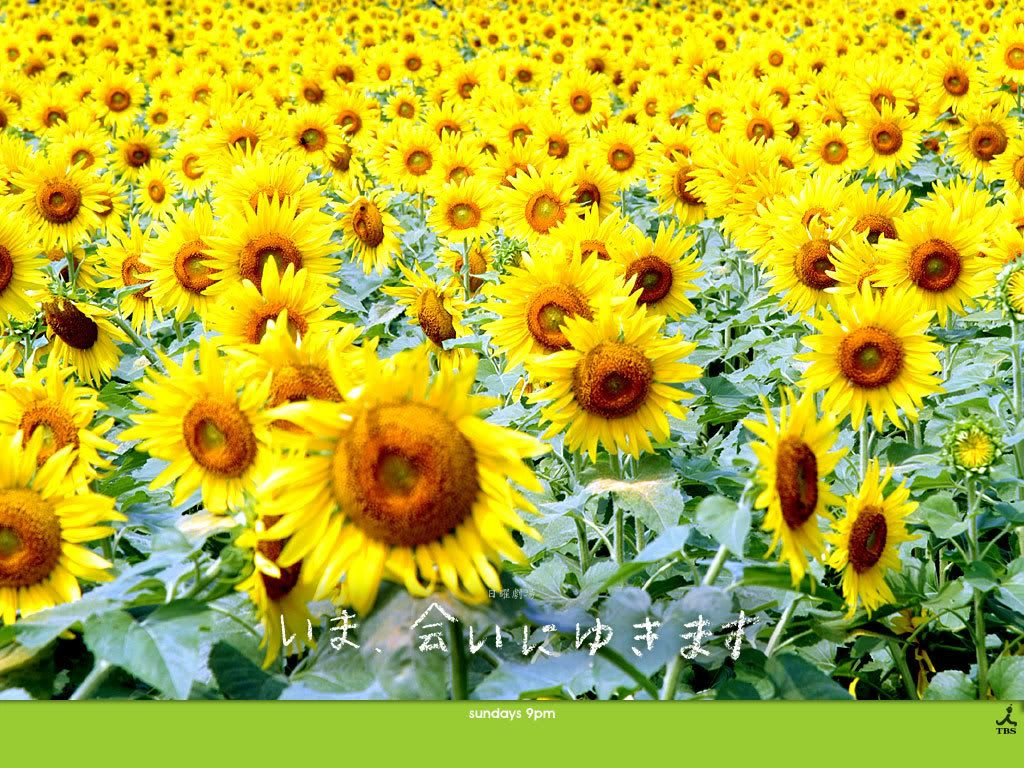 [TBS 2005] Be With You - Ima Ai ni yukimasu Vietsub tập 10 - End - Japanese drama - KST - Keep Smiling Together -