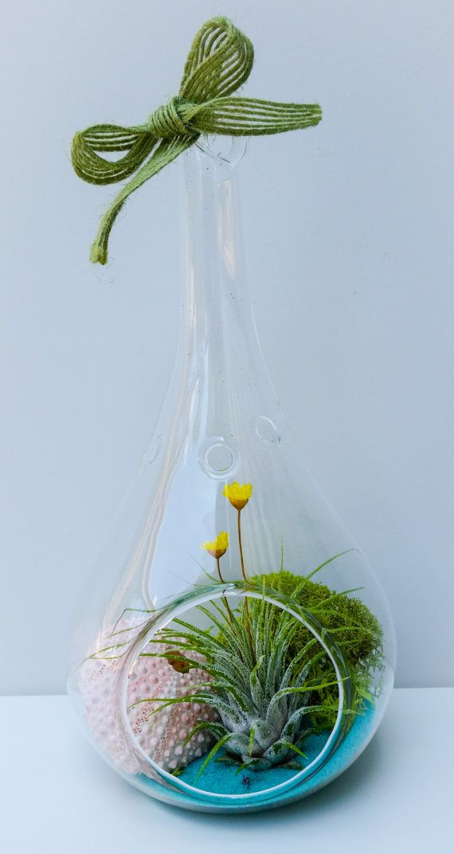 Misty Forest Sand Teardrop Glass Terrarium By Shopterrariums