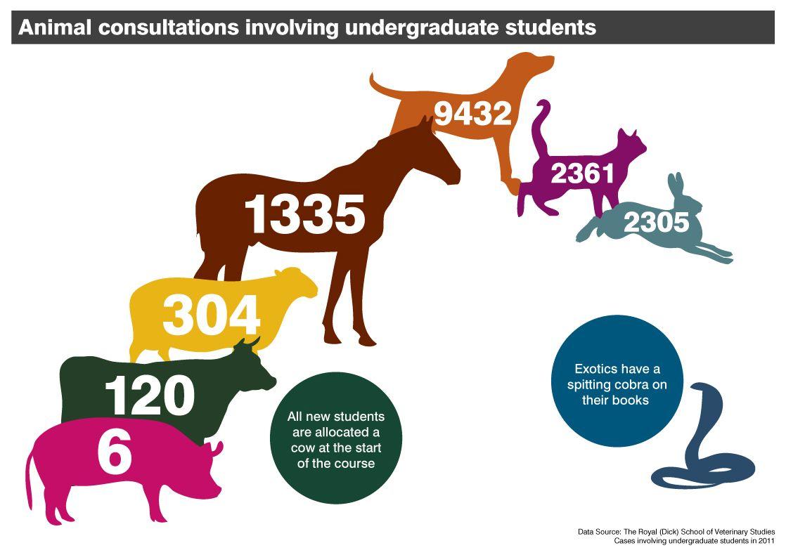 Animal consultations involving undergraduate students