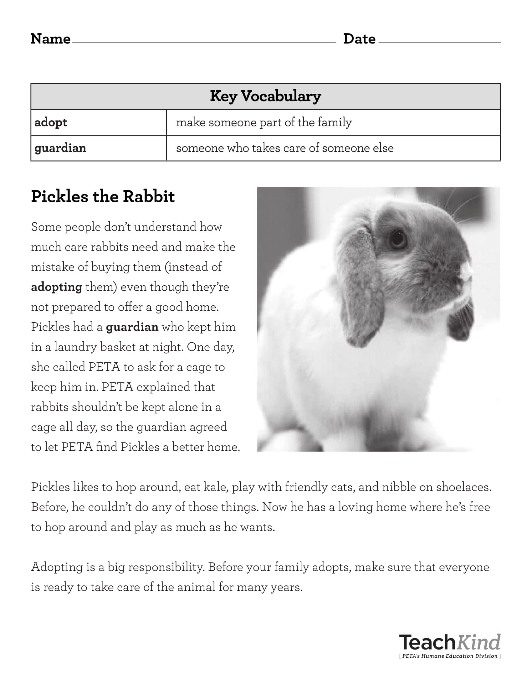 Teachkind Rescue Stories Pickles The Rabbit With Images