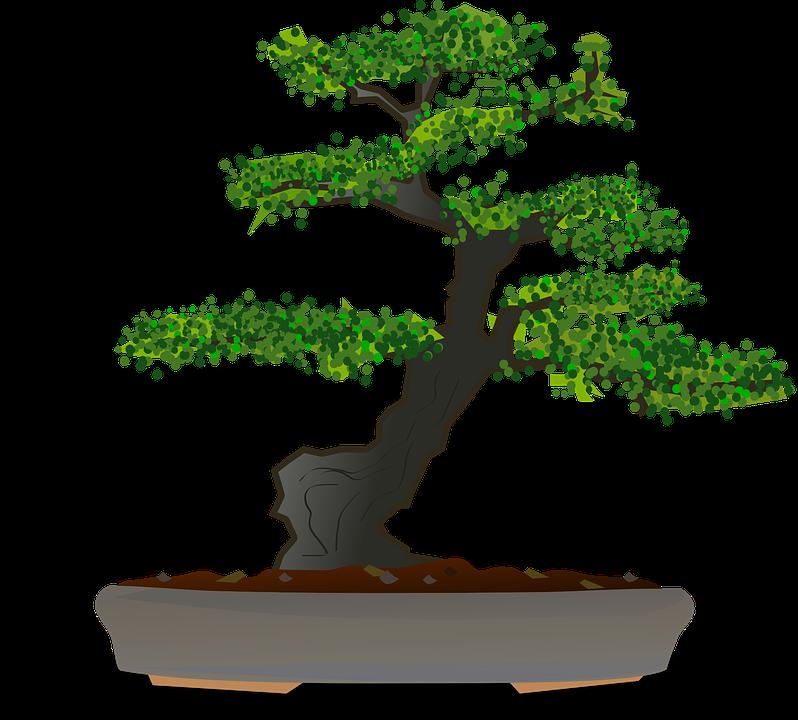 Free Image On Pixabay Bonsai Tree Dwarf Tree Garden Bonsai Tree Dwarf Trees Bonsai