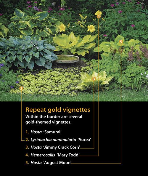 Within the border are several gold themed vignettes hosta  samurai  also best ground cover sun images on pinterest garden ideas