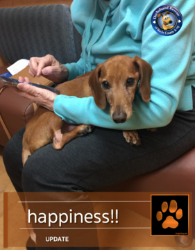 Doxie Rescue Of Bucks County Nj Posted A Story Update On Max And Imha Good Thoughts Dachshund Bucks County