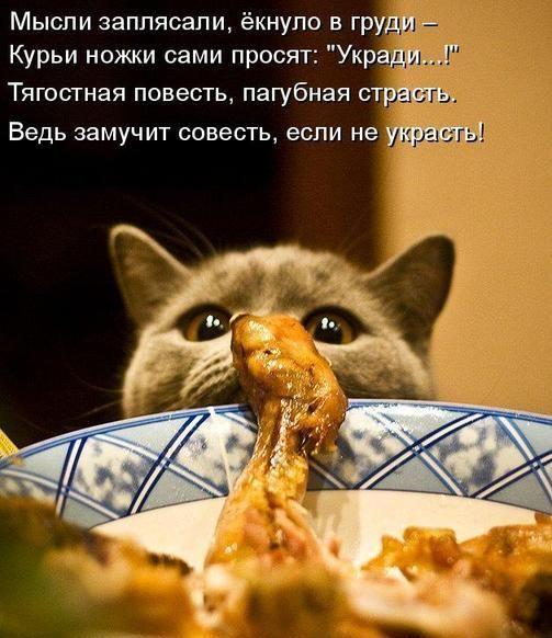 Без названия | Смешные животные, Милые котики, Смешные ...