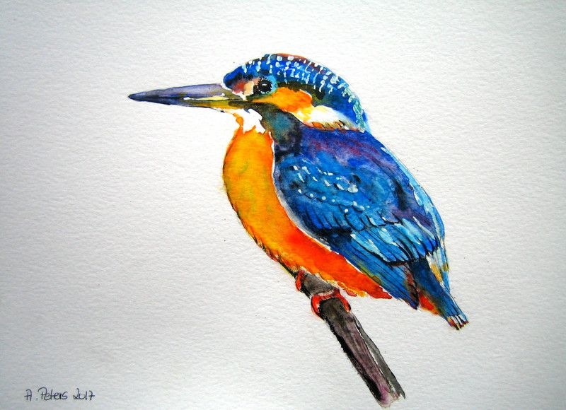 Aquarell Eisvogel In Aquarell Ein Designerstuck Von