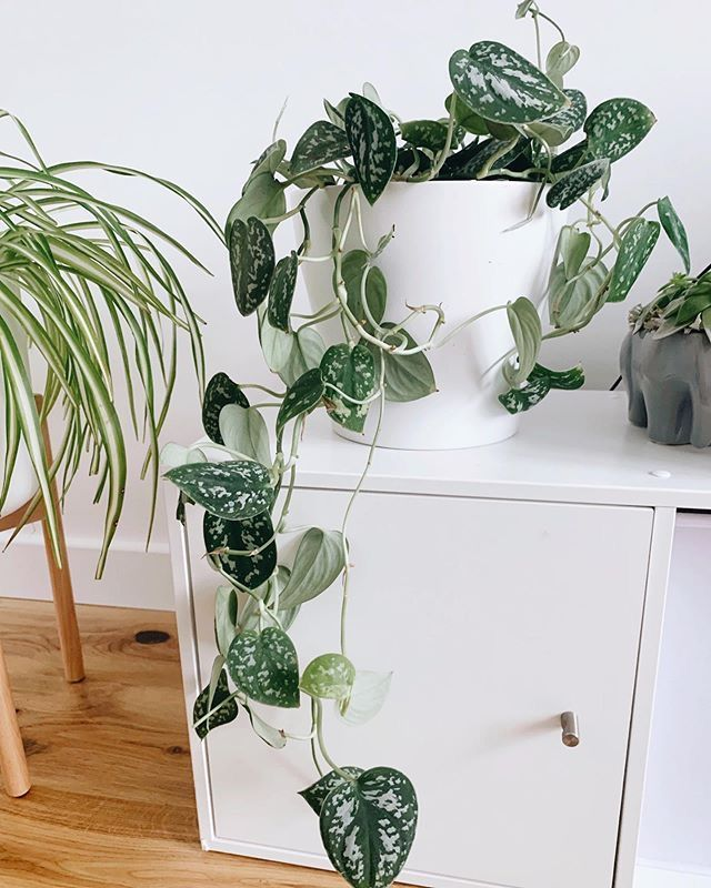 10 Best Air Purifying House Plants | Those Positive Thoughts