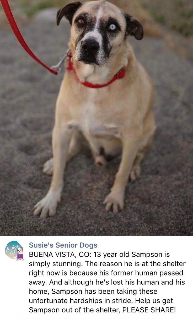 11 7 16 Please Share Sampson His Owner Passed Away And Sampson Has Lost Everything Dear To Him With Images Dog Adoption Animal Lover Animal Rescue