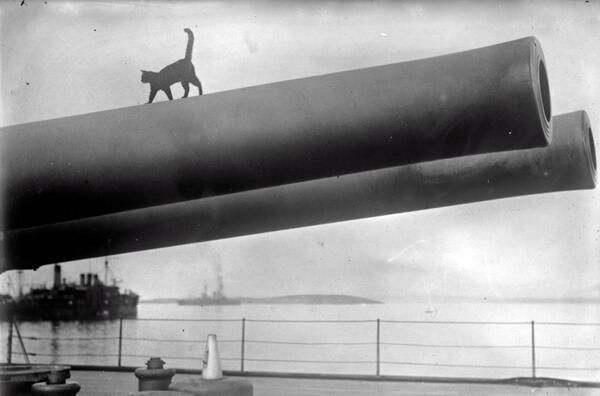 @HistoryInPix : Cat on a cannon 1915. https://t.co/SLE3GTaEdR