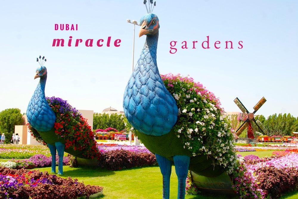 Dubai Miracle Gardens Miracle garden, Dubai garden