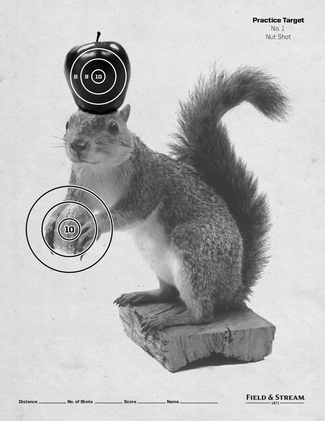 graphic regarding Printable Squirrel Target named Pin upon Printable Objectives