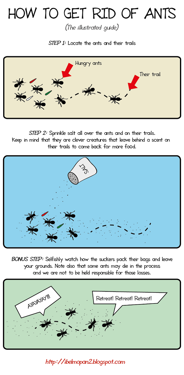How to get rid of ants (The illustrated guide) | iBelmopan ...