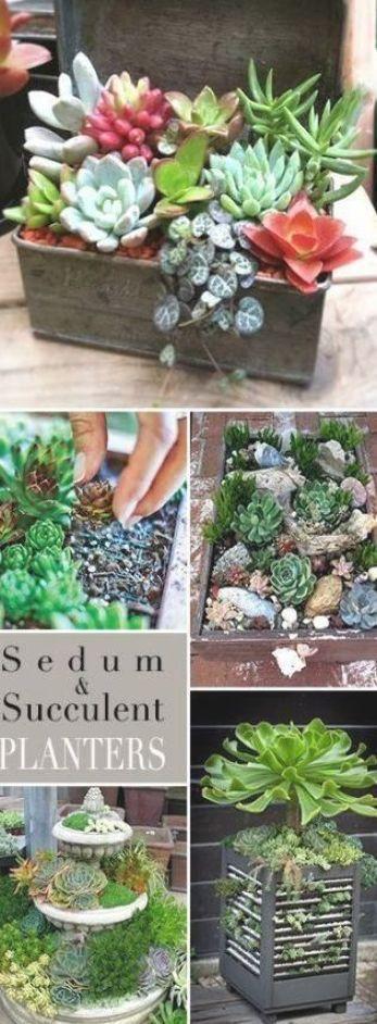 Photo of Indoor Succulent Planter Ideas Container Garden 22 Ideas For 2019 #garden #succ