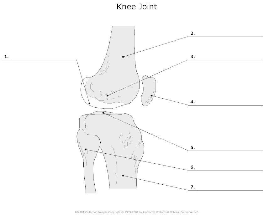 knee joint articulation unlabeled homeschool mfw rome to reformation pinterest. Black Bedroom Furniture Sets. Home Design Ideas