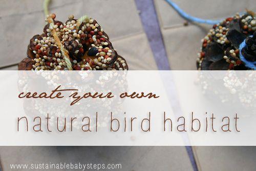 Creating Your Own Natural Backyard Bird Habitat   Birds ...