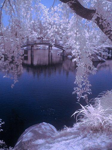 Taken with an infrared converted i535 polaroid camera Location: Sankeien Park, Shiraichi, Higashi Hiroshimashi, Hiroshima, Japan
