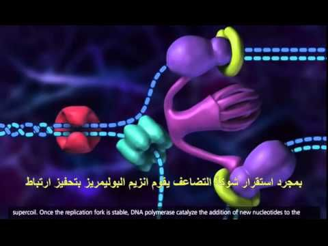 Dna replication animation super easy youtube dnablueprint dna replication animation super easy youtube malvernweather Choice Image