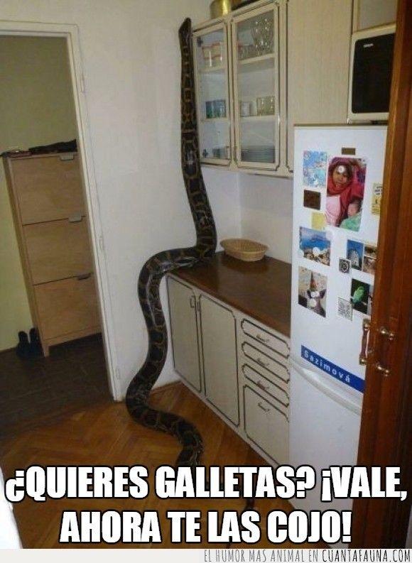Nada está demasiado alto para una serpiente