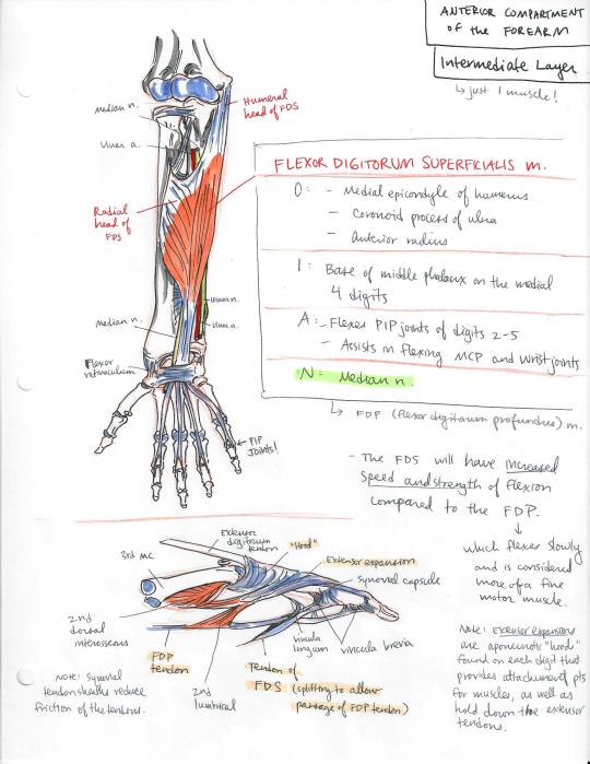why do you like anatomy and physiology