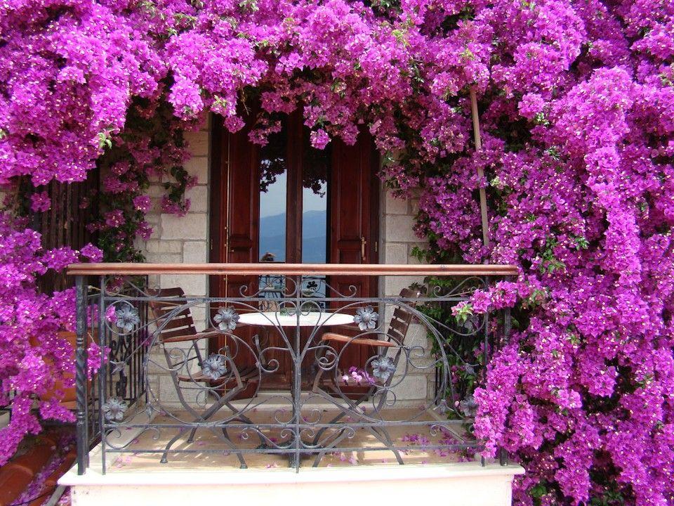 begonvil | Balkonlar, Manzara, Bahçecilik