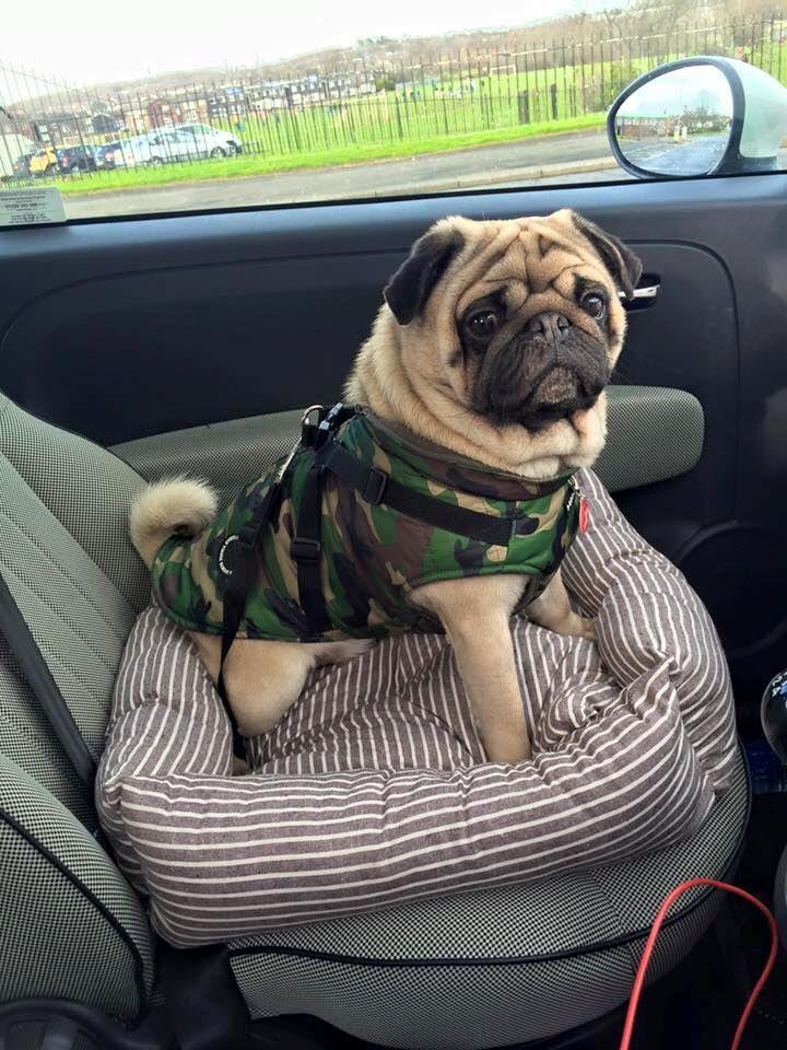 Puppia Camo Mountaineer Coat At Www Ilovepugs Co Uk Sizes S Xxl