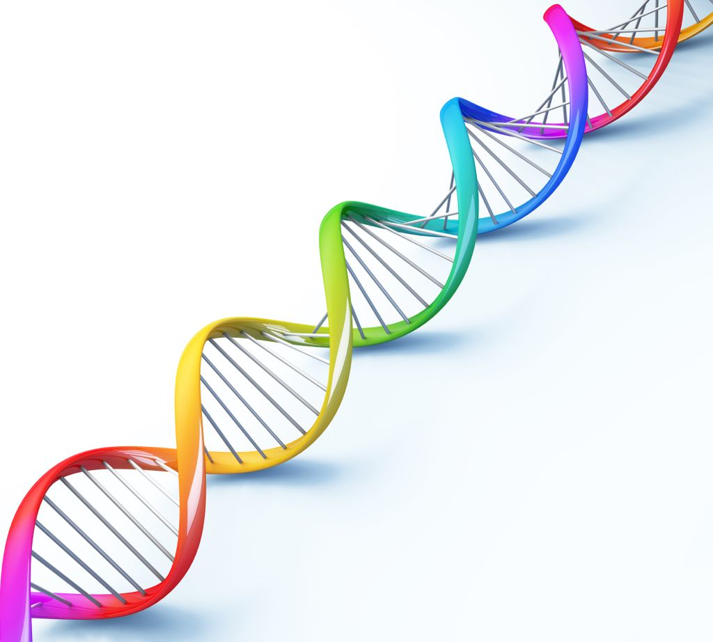 DNA Strand Colors