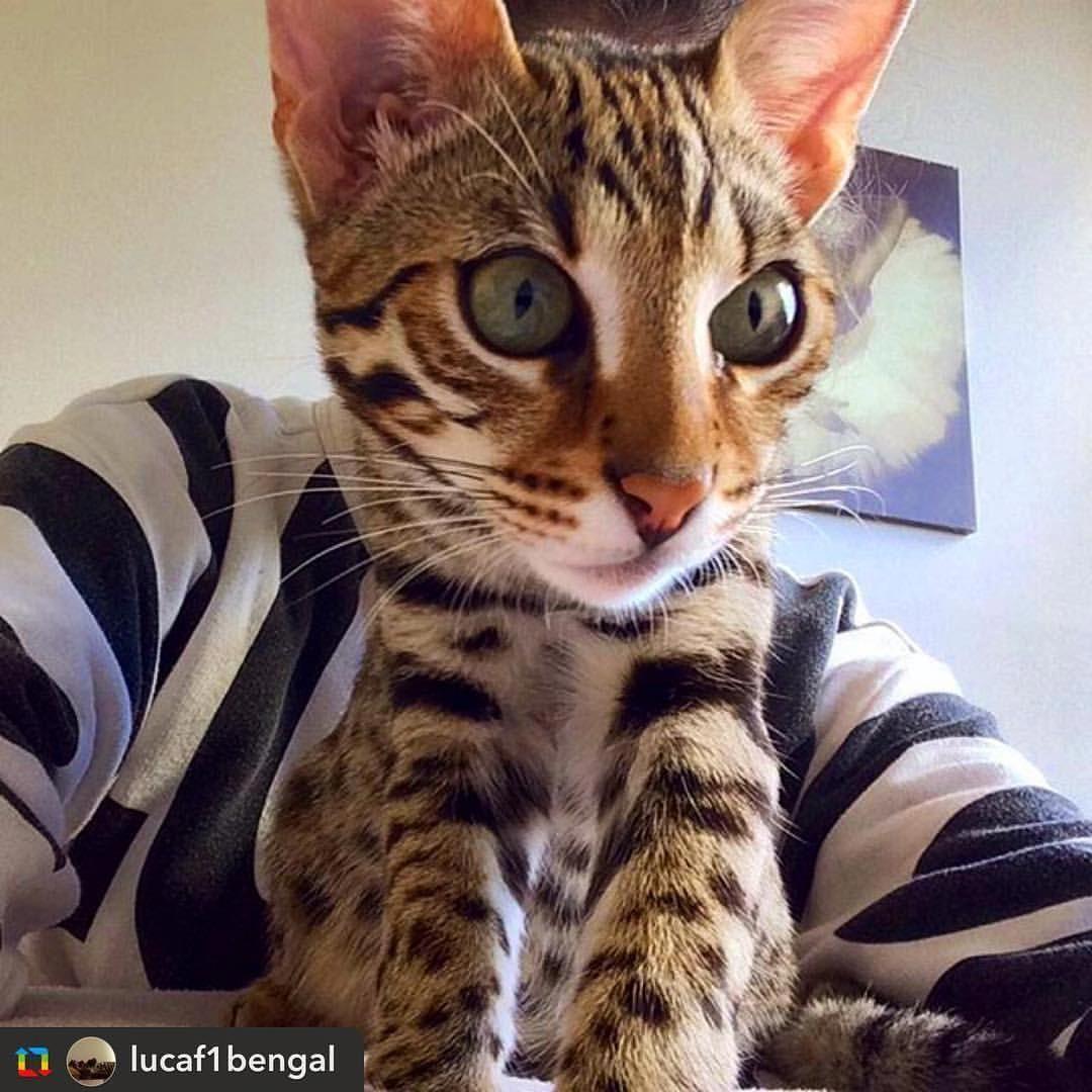Catscratch CatsAreBetterThanDogs Code 7831063187