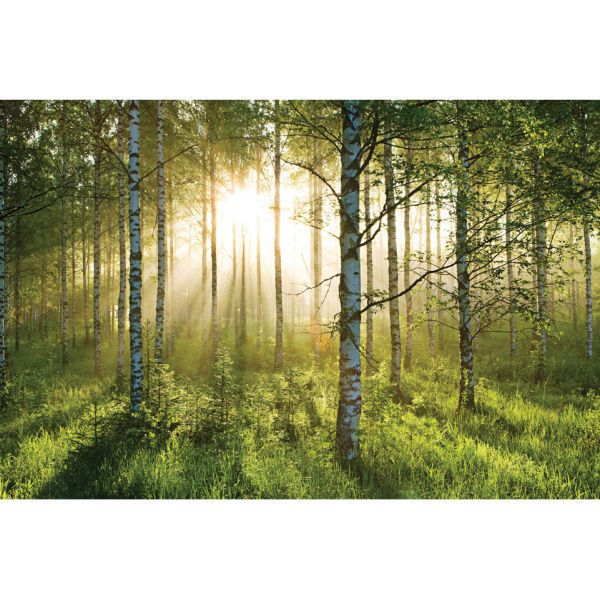 1 Wall Forest Scene Wall Mural (650 ZAR) ❤ liked on Polyvore ...