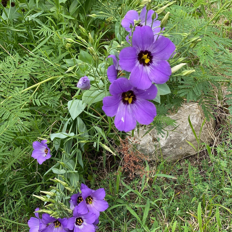 #purple  #flowers  #flowerlovers  #tuesday