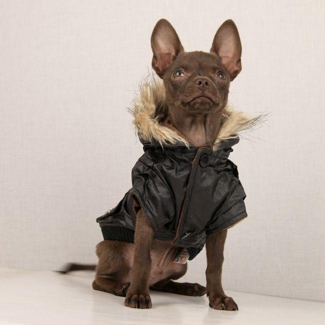 Glossy Dog Jacket in Black