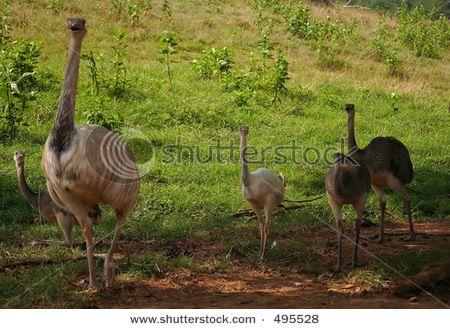 Emu Mobili ~ Sedie da giardino di emu mobili per l arredo esterno vari