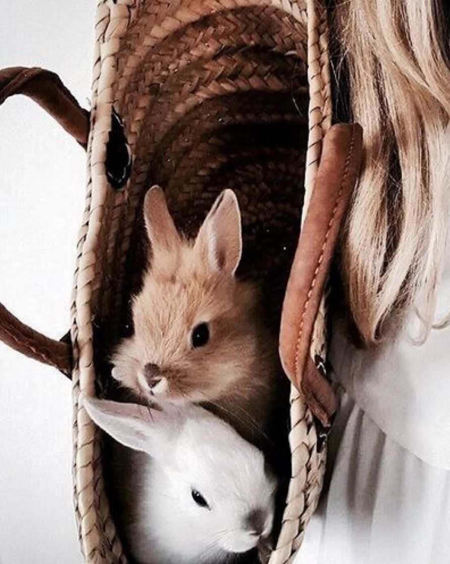 Lol Try Sneaking These Cuties Into The Movies So You Never Have To Watch Alone Cute Animals Cute Bunny Animals Friends