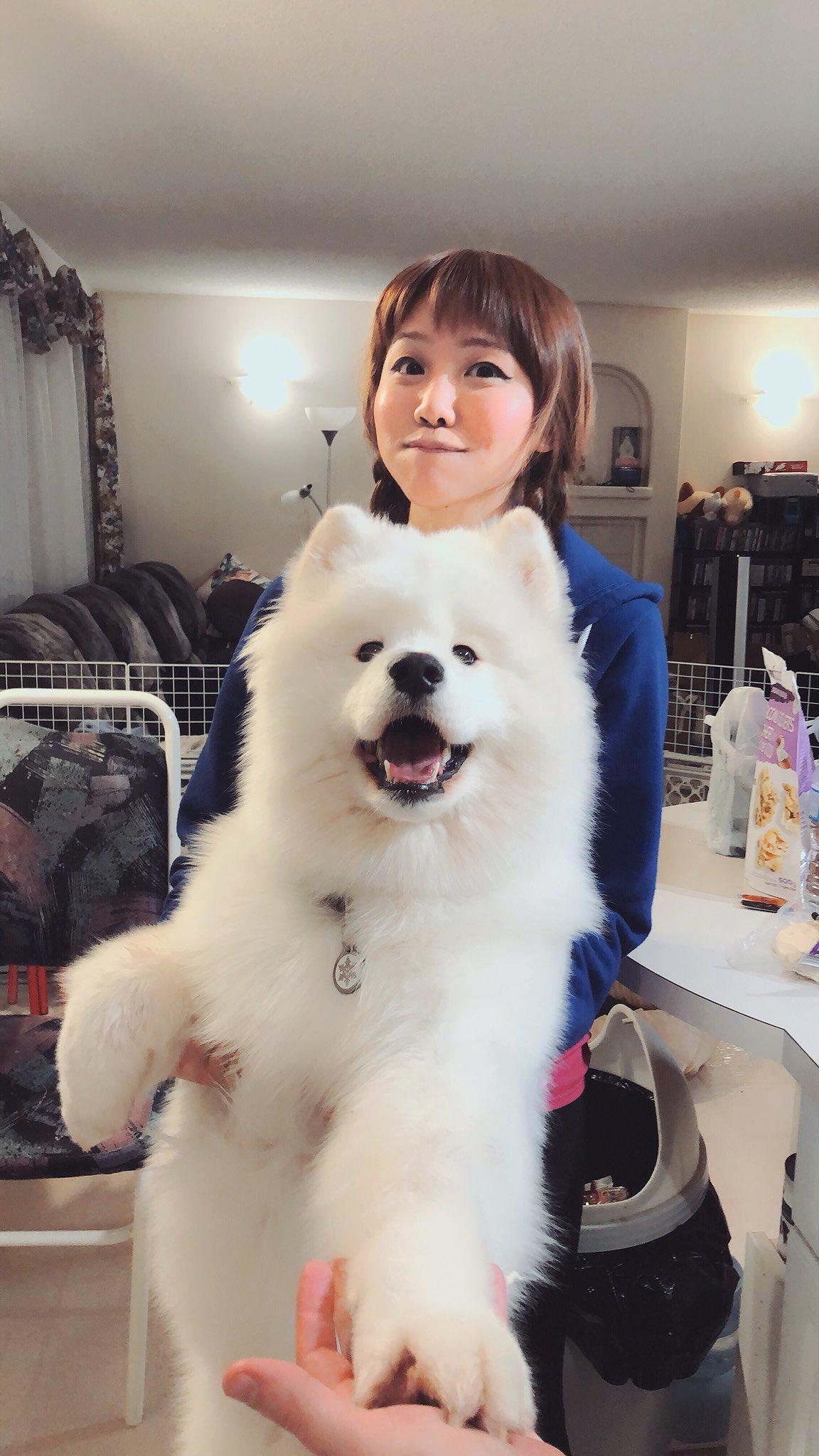 Samoyed so adorable samoyed my love pinterest dog animal and