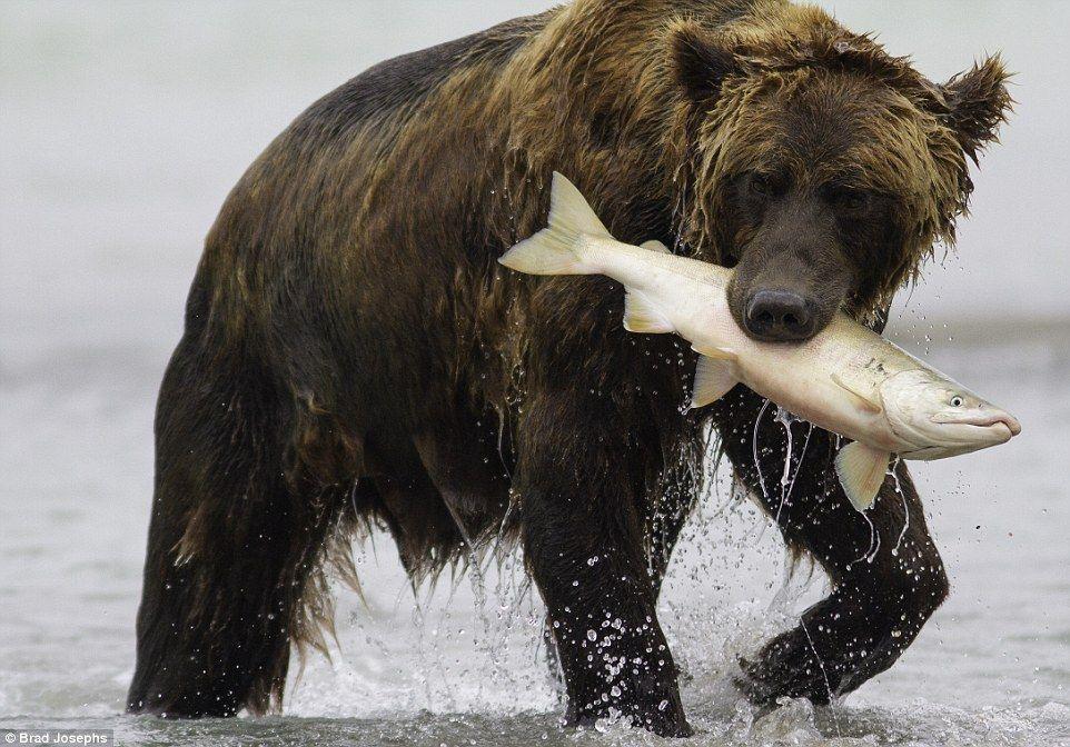 Cuantos tipos de osos hay en el mundo buscar con google for Cuantos tipos de arboles hay en el mundo
