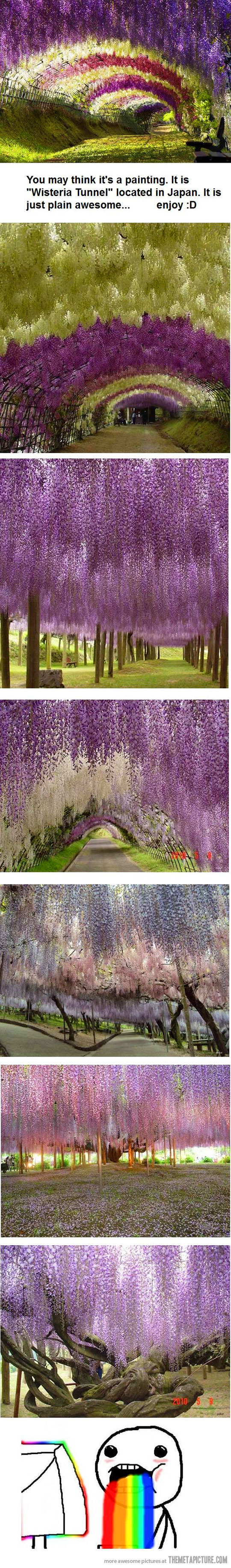 """Wisteria Tunnel"" in Japan"