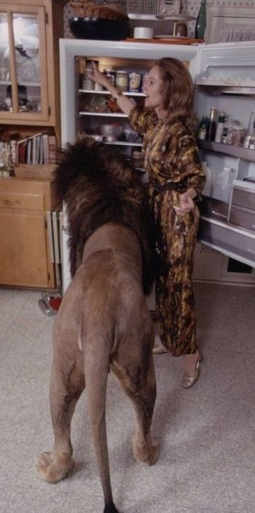 Tippi Hedren Mother Of Melanie Griffith With Their Pet Lion - 1971 family lived real lion named neil
