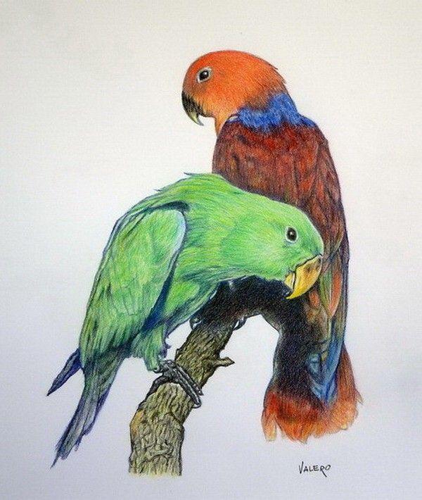 Dibujar Con Lapices De Colores Drawing And Crafts En 2019