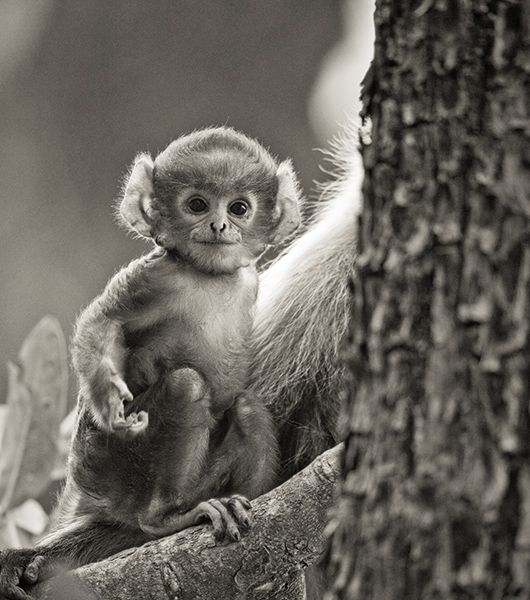 Langur Baby I Near Kanha National Park India Gero Heine Cute Animals Funny Animal Pictures