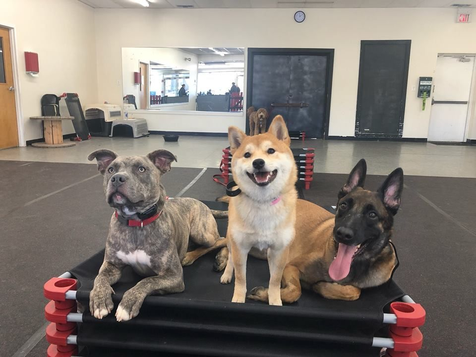 Ice Cocoa And Kane Placing Together Dog Training Puppy Obedience Classes Dogs